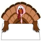 Funny turkeys Stock Photo