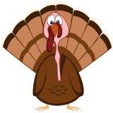 Funny turkeys Royalty Free Stock Photography