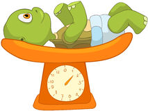 Funny Turtle. Baby Weighing Stock Image