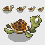 Funny turtle with big eyes, cute character or icon Royalty Free Stock Photos