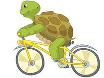 Funny Turtle. Biker. Stock Image