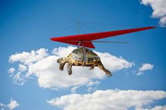 Funny turtle flying on hang-glider Royalty Free Stock Photo