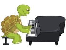 Funny Turtle. Pianist. Stock Photos