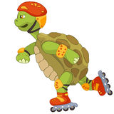 Funny Turtle. Roller. Stock Photo