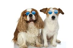FUNNY TWO DOGS WEARING SUMMER EYEGLASSES. ISOLATED STUDIO SHOT AGAINST WHITE BACKGROUND stock photo
