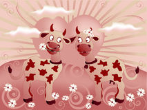 Funny valentine loving cows at sunset. Funny cow with interchangeable heads on a green meadow with blue sky Stock Image