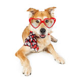 Funny Valentine's Day Dog Scarf and Sunglasses Stock Photography