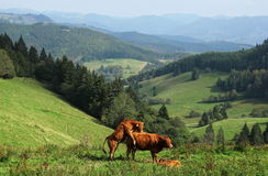 A funny view of the Black Forest Stock Photo
