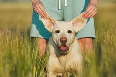 Funny view of dog Royalty Free Stock Images