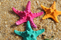 Funny vivid starfishes Royalty Free Stock Images