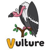 Funny vulture, illustration for ABC. Alphabet V. Children vector illustration of funny vulture sitting high on a branch above the Prairie. Alphabet V Stock Photo