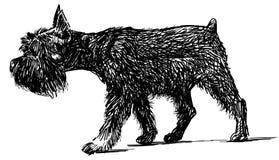 funny walking dog Royalty Free Stock Image