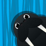 Funny walrus avatar icon. For web Royalty Free Stock Image