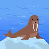 Funny Walrus Illustration Royalty Free Stock Image