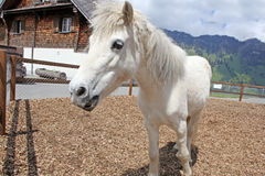 Funny white horse Stock Photo