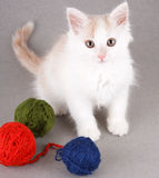 Funny white kitten Stock Image