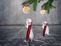 Funny white mouses in Christmas hats. Royalty Free Stock Photo