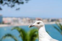 Funny White Seagull Bird Stock Photos