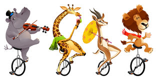 Funny wild animals on unicycles stock photos