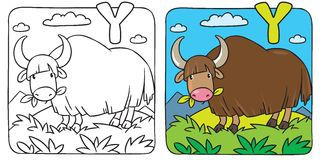 Funny wild yak coloring book. Alphabet Y. Coloring picture or coloring book of funny grazing wild yak. Alphabet Y Stock Photos