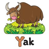 Funny wild yak, illustration for ABC. Alphabet Y. Children vector illustration of funny grazing wild yak. Alphabet Y Stock Photos