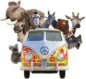 Funny Wildlife Animals, Road Trip, isolated. Funny wildlife animals are riding in a VB hippie van bus on a road trip. An elephant, camel, zebra, bear, koala stock image