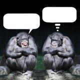 Funny Wildlife. Stock Image