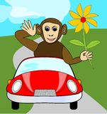 Funny winking monkey with yellow flower in red car Royalty Free Stock Images