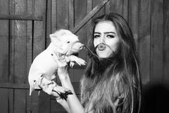 Funny woman with pig. Funny young woman with long hair putting as moustache holding cute small piglet in cloth indoor on wooden background, horizontal picture stock images
