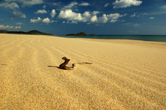 Funny Wood Snake at Chia Beach royalty free stock photos