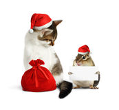 Funny xmas pet, chipmunk with blank  and cat with santa hat and. Funny xmas pets, chipmunk with blank  and cat with santa hat and sack Stock Images