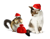Funny xmas pets, amusing chipmunk and cat with santa hat and sac Stock Photo
