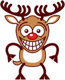 Funny Xmas reindeer feeling embarrassed Royalty Free Stock Images