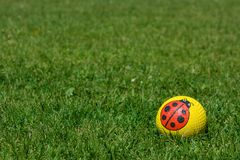 Funny yellow ball with a ladybug on green grass in a park.  royalty free stock images
