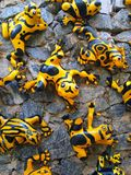 Funny yellow frogs Royalty Free Stock Images