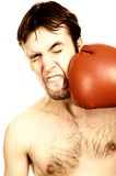 Funny young boxer Royalty Free Stock Images