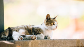 Funny Young Cat Resting In Shade On A Hot Summer Day Outdoors Stock Images