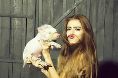 Funny woman with pig royalty free stock image
