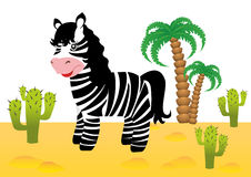 Funny zebra in Africa Stock Photography
