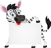Funny zebra with blank sign Stock Photo