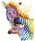 Funny zebra illustration with splash watercolor texture. rainbow background f