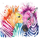 Funny zebra T-shirt graphics, rainbow zebra illustration. With splash watercolor textured background. illustration watercolor Funny zebra fashion print, poster stock illustration