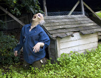 Funny zombie in front of a doghouse Stock Image
