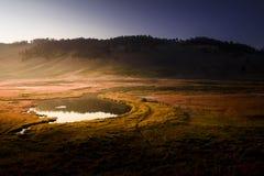 Funt w Yellowstone parku narodowym zdjęcie royalty free