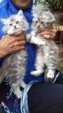 Funy katt för katt Royaltyfri Fotografi