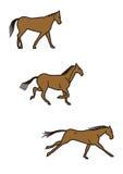 Funzionamenti del cavallo Fotografia Stock Libera da Diritti