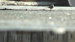 Funzionamenti di ghiaccio un uccello video d archivio
