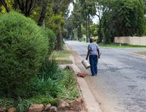 Funzionamento africano dell'uomo come giardiniere immagine stock