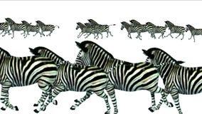 funzionamento animale di migrazione della siluetta degli asini del cavallo delle zebre del gruppo 4k, pascolo dell'Africa illustrazione di stock