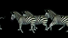 funzionamento animale di migrazione della siluetta degli asini del cavallo delle zebre del gruppo 4k, pascolo dell'Africa archivi video